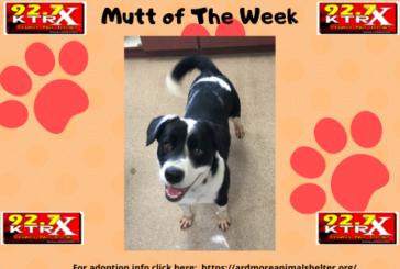 Shadow - Muttley's Mutt of the Week