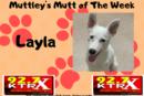 Layla - Muttley's Mutt of the Week