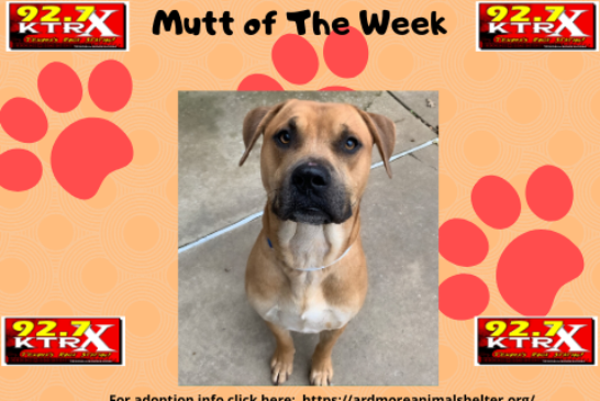 Moonshine - Muttley's Mutt of the Week