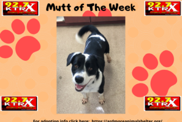 Shadow - Muttley's Mutt of the Week